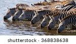 group of zebras drinking water...   Shutterstock . vector #368838638
