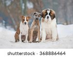 Group Of Three Funny Puppies I...