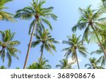 Coconut Palm Trees On Blue Sky...