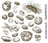 nut set sketches | Shutterstock . vector #368989943