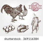 poultry breeding | Shutterstock . vector #369116384