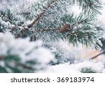fir tree branches in snow  | Shutterstock . vector #369183974