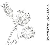 beautiful tulip flowers line... | Shutterstock .eps vector #369215276