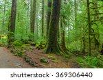 rain forest in oregon | Shutterstock . vector #369306440