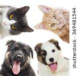 Stock photo puppy and kitten peering 369481544