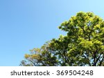 Tree Blue Sky  Tree Top Agains...