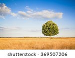 isolated tree in a tuscany... | Shutterstock . vector #369507206