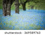 forget me not flowers in an... | Shutterstock . vector #369589763