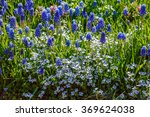 Spring Flowers   Blue Flowers...