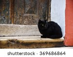 Stock photo black cat is sitting in front of an old wooden door 369686864