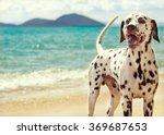 Stock photo dog dalmatian sea 369687653