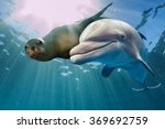 dolphin and sea lion underwater ... | Shutterstock . vector #369692759