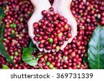 fresh red berries coffee beans... | Shutterstock . vector #369731339