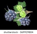 illustration with blackberry... | Shutterstock .eps vector #369929804
