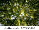 Straight  Outstretched Forests
