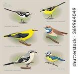 Image Set Of Birds  White...