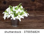 Bouquet Of Snowdrops In Little...
