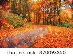 Autumn Alley. Sunlight Breaks...