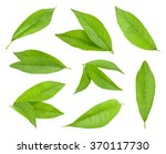 peach leaf isolated | Shutterstock . vector #370117730