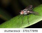 fly | Shutterstock . vector #370177898