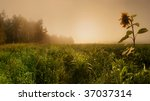 Panoramic Landscape With Corn...