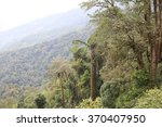 a wall of trees on a side of a... | Shutterstock . vector #370407950