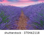 beautiful colors of lavender... | Shutterstock . vector #370462118
