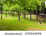 quiet green park. | Shutterstock . vector #370544594
