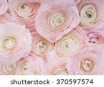 Stock photo pink flowers background of delicate pink flowers 370597574