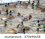 Ducks. They Live In Lakes And...