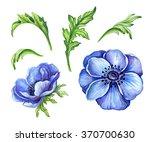 Blue Anemone Flower Details ...