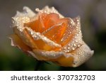 The Sun Rose In Raindrops