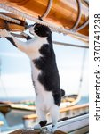 Playful Cat On A Sailboat At...