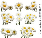 Collection Of Flowers White...