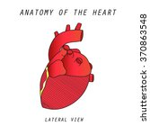 anatomy of the heart lateral...   Shutterstock . vector #370863548