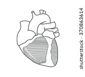 anatomy of the heart anterior... | Shutterstock . vector #370863614