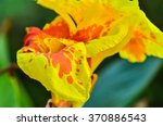 close up canna flowers | Shutterstock . vector #370886543