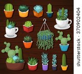 colorful vector cactus and...   Shutterstock .eps vector #370902404