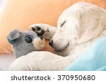 Stock photo golden retriever puppy sleeping with toy on the bed 370950680