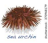 sea urchin isolated white... | Shutterstock .eps vector #370968179