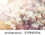 Stock photo blooming tree with white flowers soft focus spring flowers background 370989356