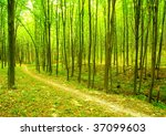 a path is in the green forest | Shutterstock . vector #37099603