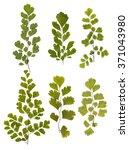 Set Of Green Fern Leaves...