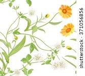 flowers calendula clover | Shutterstock .eps vector #371056856