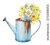Watercolor Daffodil Flowers In...