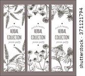 Set Of 3 Vector Herbal Tea...