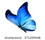 Stock photo color butterfly isolated on white background 371209448