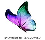 Stock photo color butterfly isolated on white background 371209460