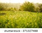 grass  | Shutterstock . vector #371327488