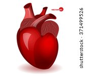 body heart with veins in a... | Shutterstock .eps vector #371499526
